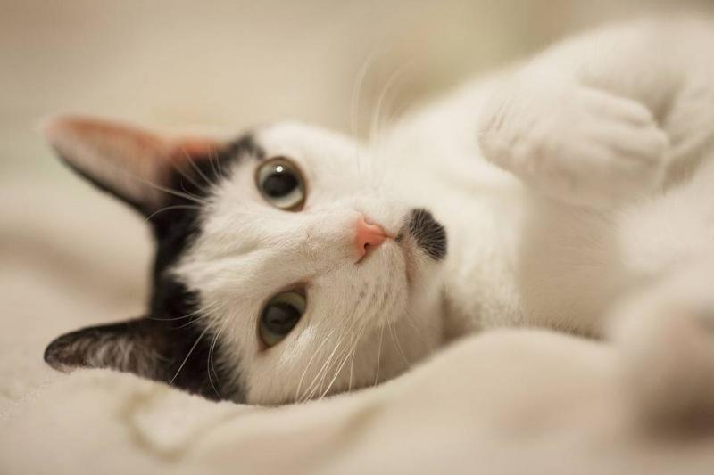 猫得了狂犬病什么症状猫咪咬伤怎么办