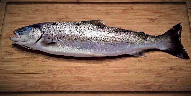 喝红茅药酒可以吃鱼吗注意饮食清淡